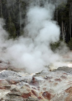 Yellowstone thermals (79)