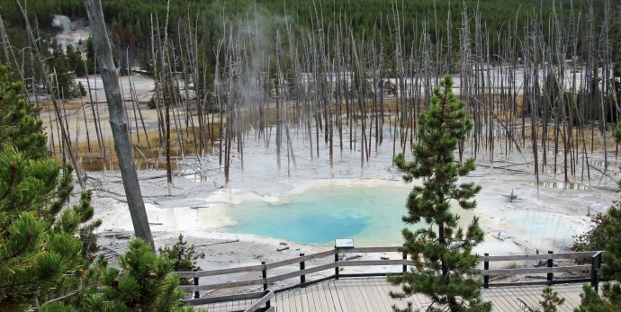Yellowstone thermals (80)