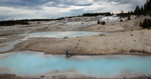 Yellowstone thermals (98)