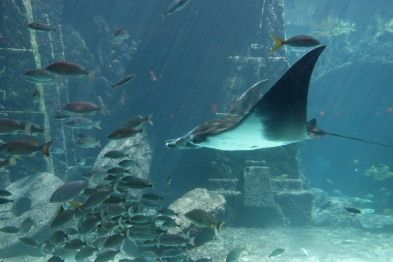 Atlantis Resort (12)