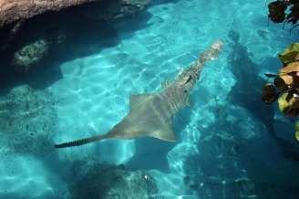 Atlantis Resort (18)