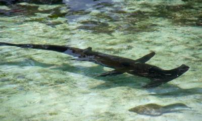 Atlantis Resort (21)