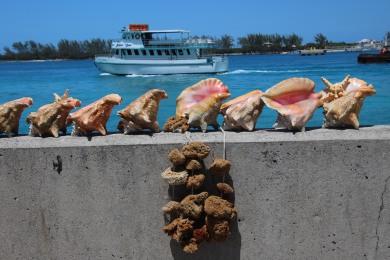 Nassau (18)