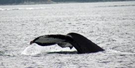 - Juneau (85)