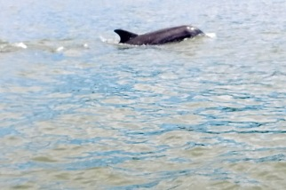 Dolphins HHI (1)