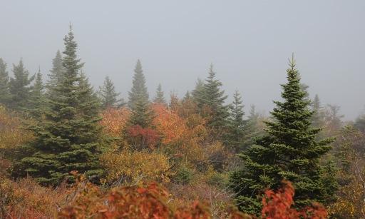 ~Acadia (104)