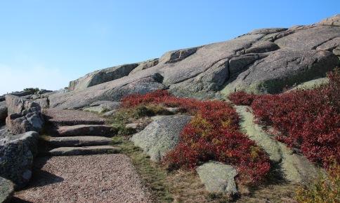 ~Acadia (82)