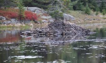 ~Acadia last day (20)