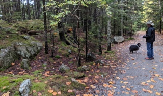~Acadia walk