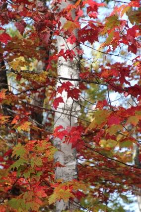 ~Vermont 2 (7)