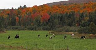 ~Vermont (4)