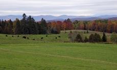 ~Vermont Oct 6 (4)