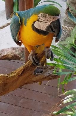 Costa Maya (17)