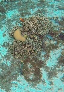 Cozumel 2019 (1) eels