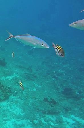`Cozumel fish 3