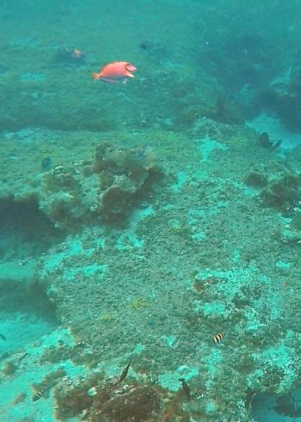 ~ Cozumel triggerfish 2