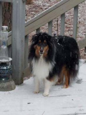 Kodi in snow