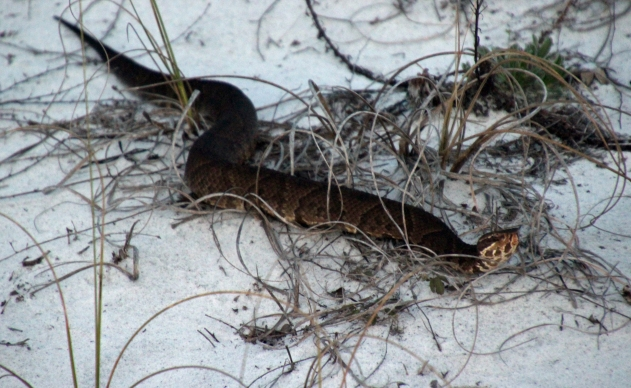 Grayton Beach FL (35) A
