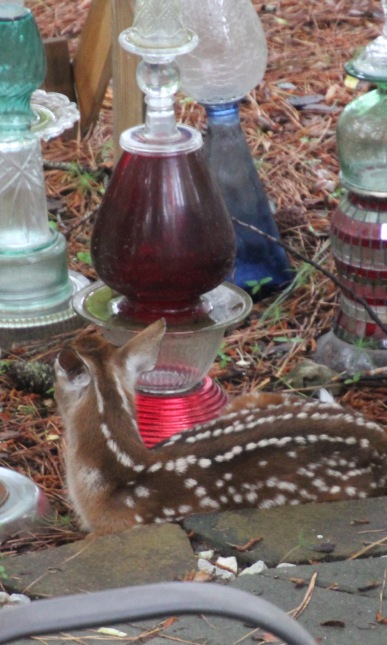 Fawn in totems (2)