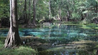 ~Blue Springs SP (17)