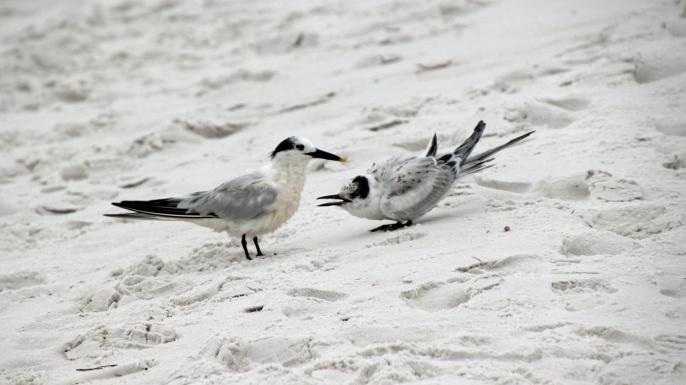 ~Henderson Beach 1 (27)