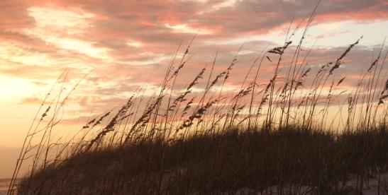 ~Henderson Beach 1 (45)