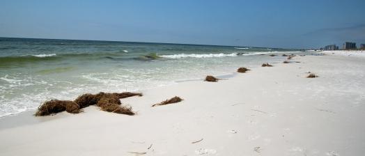 ~Henderson Beach 1 (60)