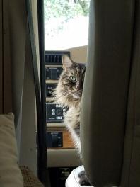 ~Merlin curious